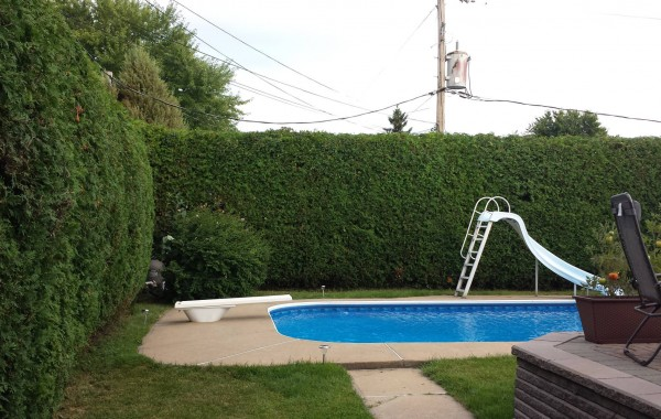Taille de haie contour de piscine